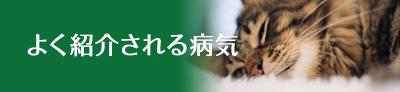 まえたに動物病院『よく紹介される病気(太平病院)』